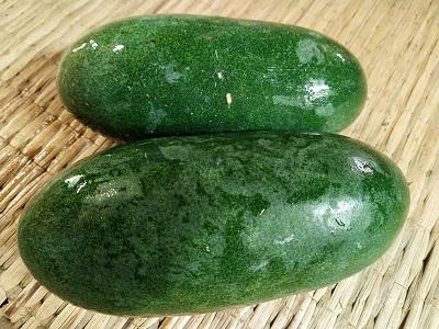 จำหน่ายเมล็ดพันธุ์ฟักเขียว